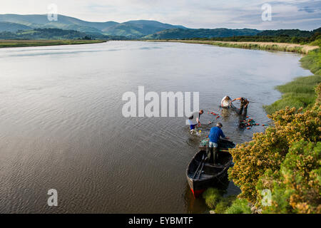 Seine netters on the Dyfi: Licensed fishermen using traditional 'seine netting' techniques to fish for sewin and - Stock Photo