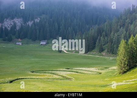 Wurzeralm, alpine cabins, meandering stream, Austria - Stock Photo