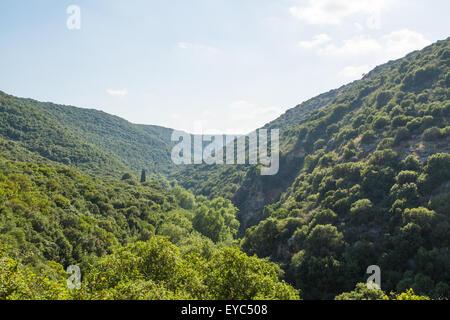 Israeli Mediterranean flora with a huge variety  of species. Upper Galilee. - Stock Photo
