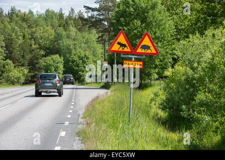 Warning of wild boar and moose on the road - Stock Photo