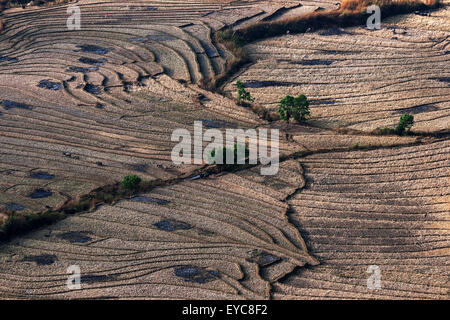 Harvested rice paddies, terraced fields, near Kyang Tong, Shan State, Golendes Triangle, Myanmar - Stock Photo