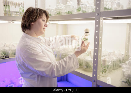 Scientist researching on plants in laboratory - Stock Photo