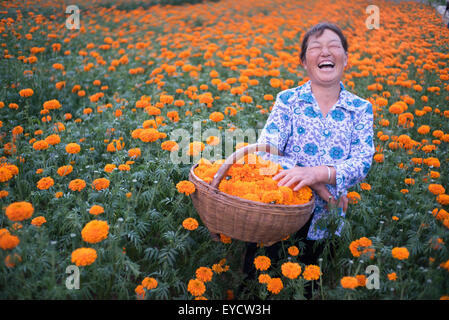 Xi'an, China's Shaanxi Province. 27th July, 2015. A tagetes grower smells when talking about her income in Mantou - Stock Photo