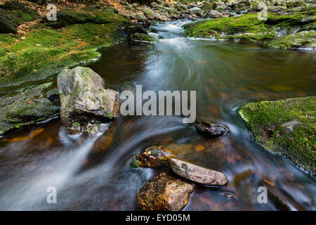 Low angle view of a rapids in a small mountain stream in the High Fens, Ardennes, Belgium running between green - Stock Photo