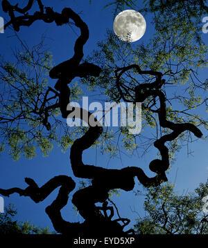 Vollmond, Impression, Landschaft - Stock Photo