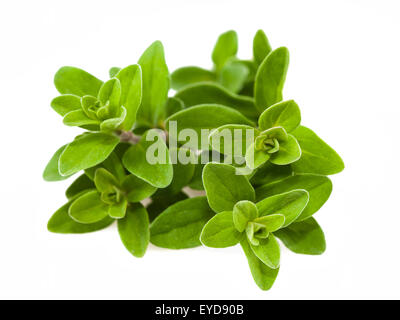 Bunch of marjoram isolated on white - Stock Photo