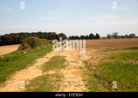 Farm track sandy soil of ploughed fields former Sandlings heathland Sutton, Suffolk, England, UK - Stock Photo