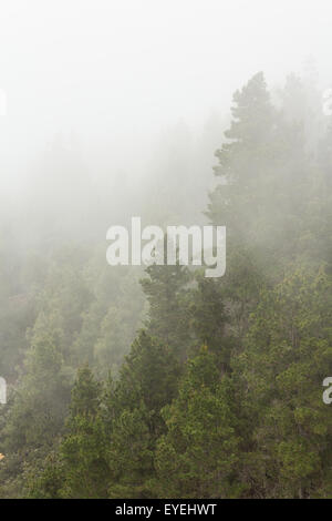 trees in thick fog - clouded forest - Stock Photo