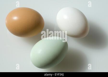 Huehnereier, Gruenes; Gruen, braun, weiss, - Stock Photo