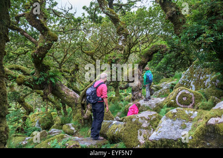 A family walking in Wistman's Wood, a high-altitude oakwood (Quercus robur), near Two Bridges, Dartmoor, Devon, - Stock Photo