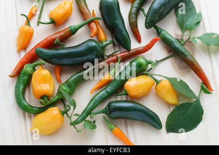 Variety of homegrown chillies on a wooden board - Stock Photo
