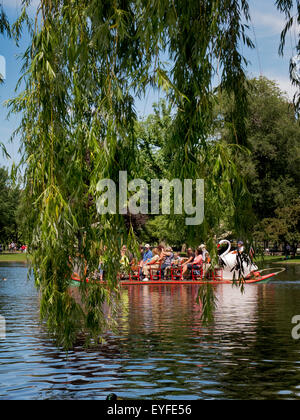 A hanging willow branch frames a Swan Boat in the Boston Public Garden Duck's Pond. The Swan Boats are a fleet of - Stock Photo