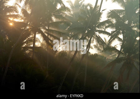 Sun coming through misty trees at dawn, near Unawatuna; Thalpes Sri Lanka - Stock Photo