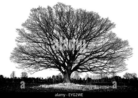 Big old oak tree with winter leafless branches in silhouette as a pen and ink, black and white, artistic illustration - Stock Photo