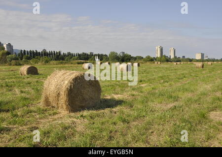 Large round grass hay bales In Zagreb - Stock Photo