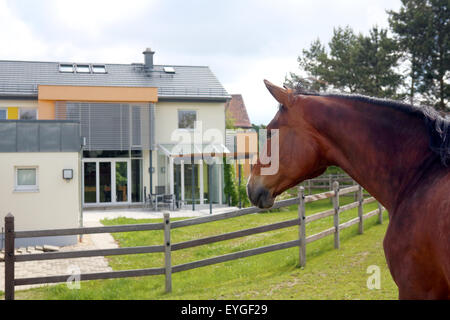 Oberoderwitz, Germany, horse in a paddock in front of two detached houses - Stock Photo