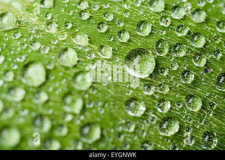 Waterdrops on a green leave, macro - Stock Photo