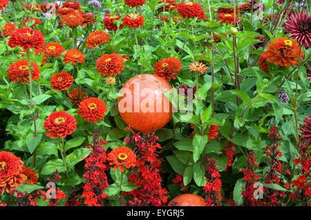 Rosenkugeln, Blumenbeet - Stock Photo