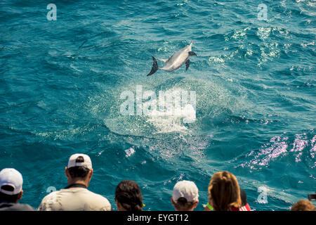 Brazil, Pernambuco, Tourists watching dolphins; Fernando de Noronha - Stock Photo