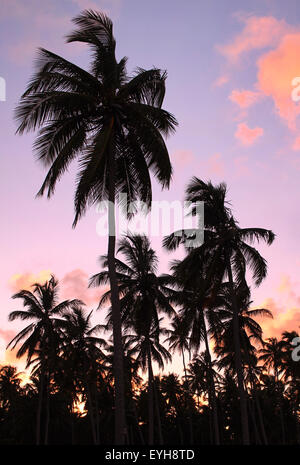 Silhouettes of beautiful palms on the beach during sunset - Stock Photo