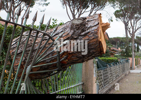 part of a pine tree trunk fallen on a railing after windstorm - Stock Photo