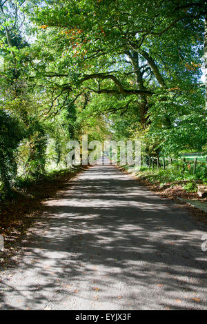 Quiet tree-lined country lane in autumn Lockeridge, Wiltshire, England, UK - Stock Photo