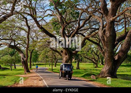 Sri Lanka, North Central Province, Anuradhapura, rickshaw under tree - Stock Photo