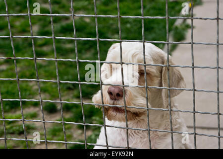 dog behind a fence in a dog rescue center - Stock Photo