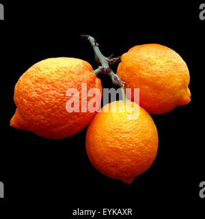 Zitrone; Limone, Rosso