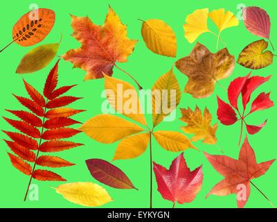 Herbstblaetter; bunt; leuchtend; Blatt; Blaetter; - Stock Photo