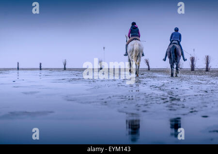 Germany, low things, new plant, Cuxhaven, wadden sea, mud flats, woman, horse, - Stock Photo