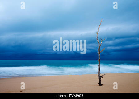 Sri Lanka, Southern Province, South Coast beach, Tangalle beach - Stock Photo
