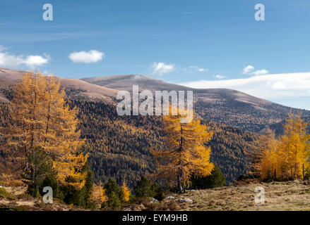 Herbst im Nationalpark Nockberge, Kärnten, Österreich, Falkert - Stock Photo