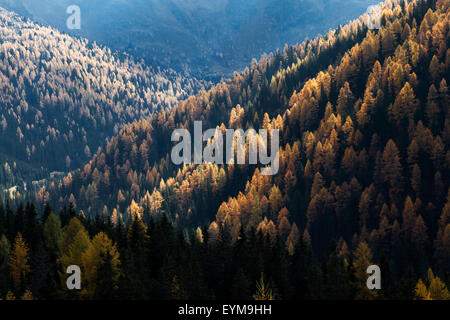 Herbst im Nationalpark Nockberge, Kärnten, Österreich - Stock Photo