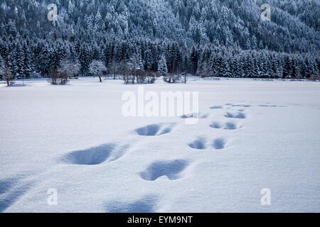 Winterlandschaft in Kärnten, im Vordergrund Spuren im Tiefschnee - Stock Photo