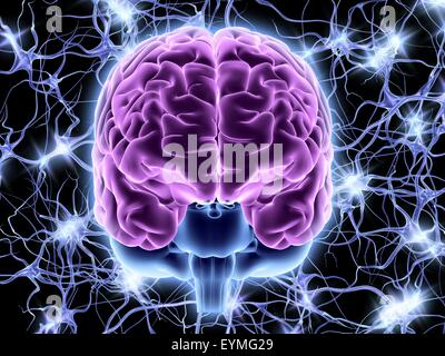 Computer artwork of a frontal view of a human brain. In the background a neural network of nerve cells firing. - Stock Photo