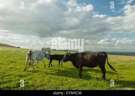 Summer afternoon on the South Downs near Rodmell, East Sussex, England.