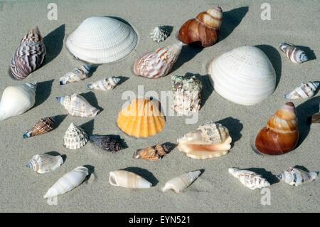 Meeresschnecken