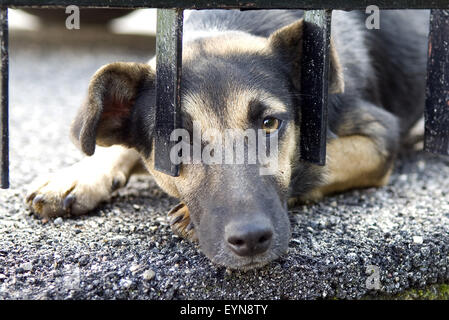 Strassenhund, bettelnd - Stock Photo