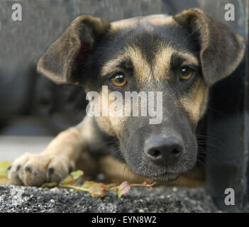 Strassenhund, Betteln; - Stock Photo