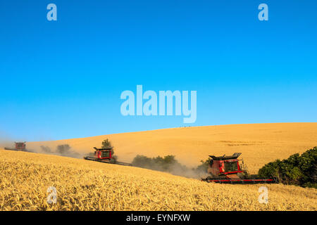 Multiple combines harvest wheat in the Palouse region of Washington - Stock Photo