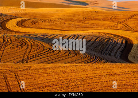 Field of stubble from harvested grain in the hills of the Palouse regiion of Washington - Stock Photo