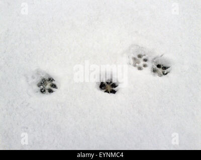 Hundespuren, Spuren im  Schnee - Stock Photo