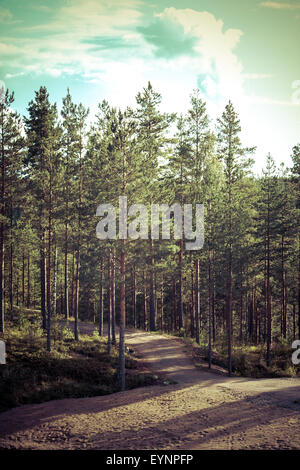Vintage toned image of forest with road in east Finland - Stock Photo