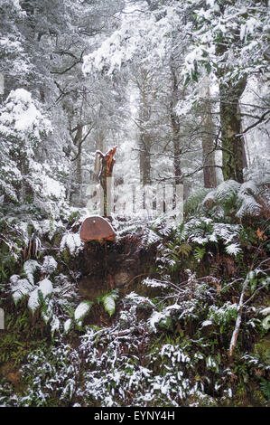 Heavy snowfall in eucalyptus forest on Mount Donna Buang, Australia - Stock Photo