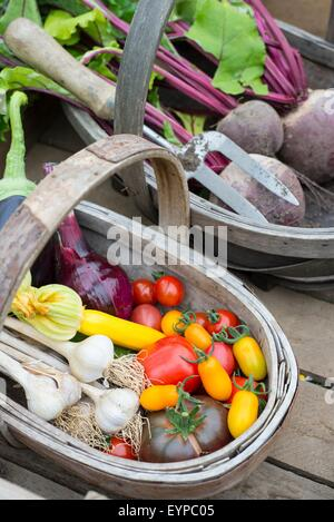 Wooden trug with freshly harvested various summer vegetables, including tomatoes, onion, courgettes, aubergine, - Stock Photo