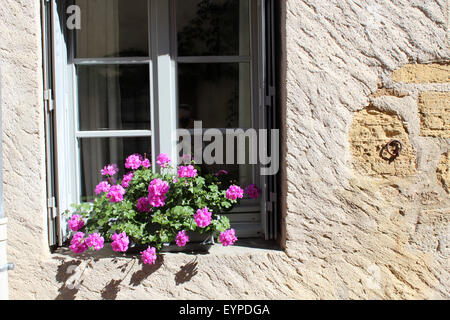 Pink geraniums on window sill in France - Stock Photo