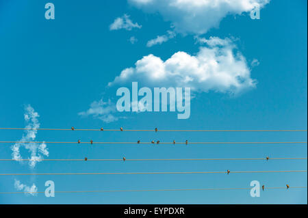 Swallows perched on telegaph telephone wires appear to make musical nots as if sheet music with a fluffy cloud treble - Stock Photo