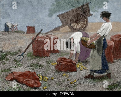 History agriculture. Mowing. Engraving, 19th century. - Stock Photo