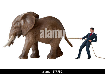 business challenge businessman trying to restrain an elephant isolated on white background - Stock Photo